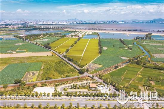 """石狮市推进农村人居环境整治 打造""""万亩城市中央公园"""""""