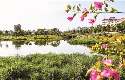 曾经排水沟蜕变成景观河 西岑溪综合治理达到目标
