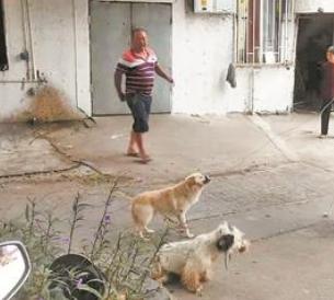 携带犬只外出未束牵引带 执法队员对其作出处罚